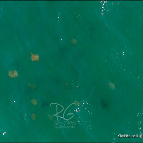 stingrays, aerial
